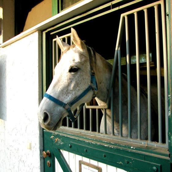 Gestüt Sommerberg Pferd in einer Box
